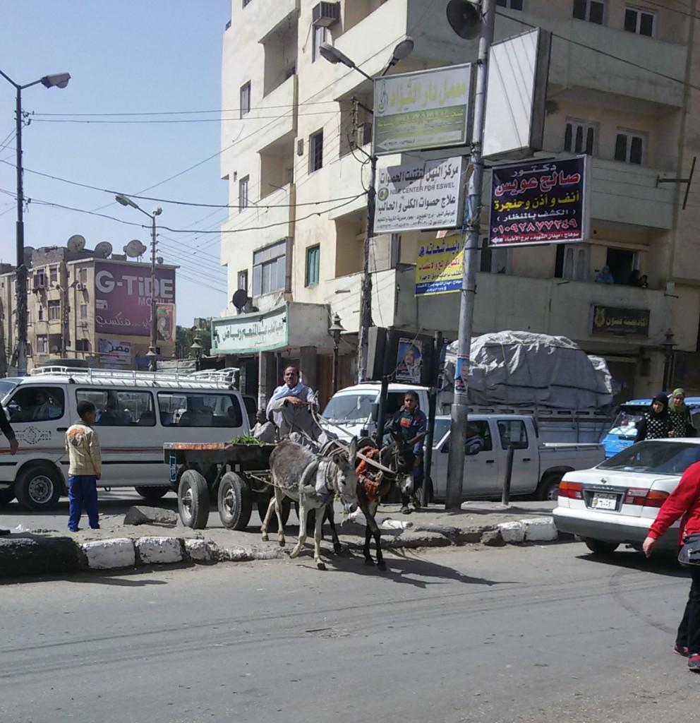 صورة صريحة توضح الأهمال بميدان الشهيد بسوهاج عربة كارو تعبر الجزيرة الوسطى للطريق