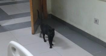 القطط_الصحه في مصر