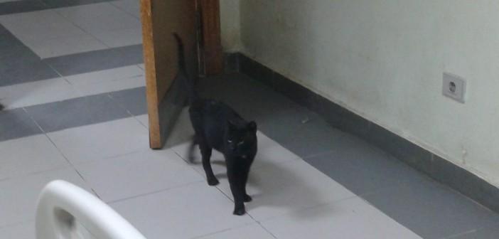 بالصورة.. قطط تتجول في مستشفى المحلة.. وحصير وغلايات شاي في «الإنعاش»