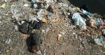 القمامة الطيور النافقة على ضفى النيل