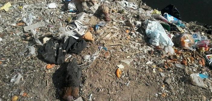 بالصور.. تلوث ومخلفات على ضفاف النيل في سوهاج (حملة #أنقذوا_النيل)