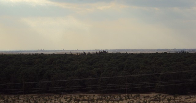 قصة «الإسماعيلية الجديدة».. إزالة منازل شرق البحيرات وتجريف قرابة 2 مليون شجرة مثمرة (فيديو)