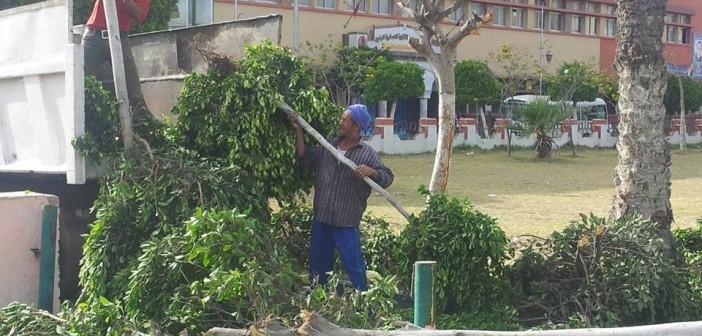 مذبحة أشجار في حي المهندسين