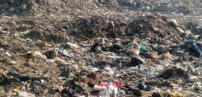 بالصور.. مقلب قمامة على النيل بالغربية يهدد بكارثة صحية وبيئية