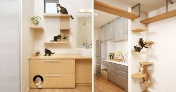بيوت صالحة للقطط