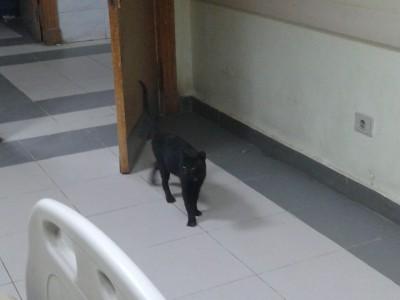 قطط في مستشفى المحلة