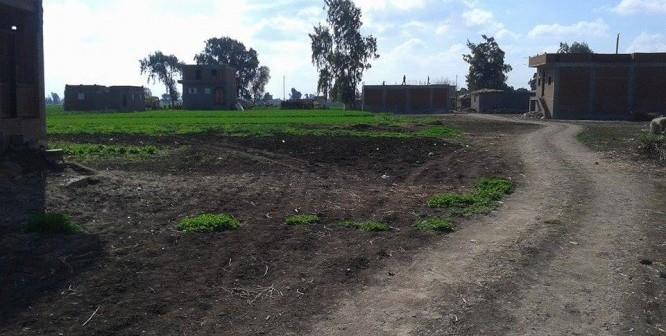 تبوير الأراضي الزراعية في كفر الشيخ وسط غياب المسؤولين (صور)