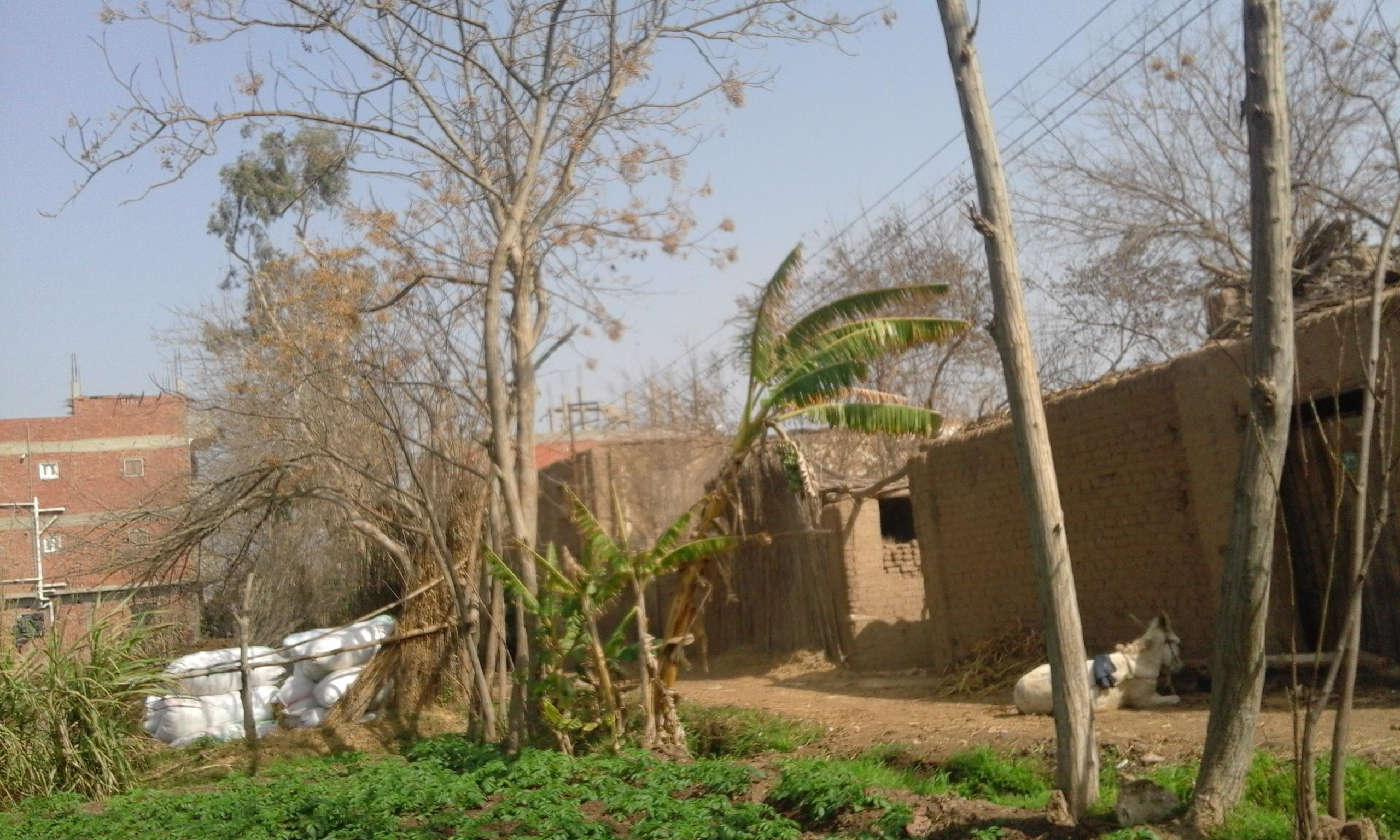 بيوت المواطنين التي ستتعرض للهدم بعد تغيير مسار طريق بنها ـ السادات