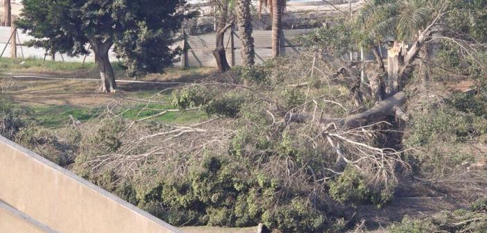 غضب سكان مصر الجديدة بشأن ما أثير عن تحويل حديقة الميريلاند إلى «جراج» (صور)