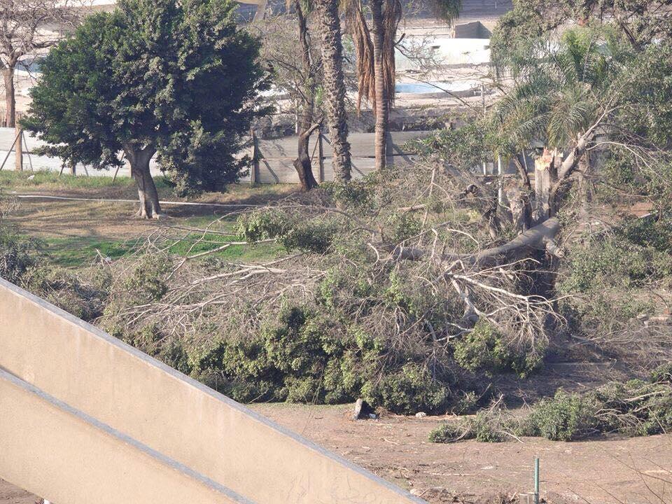 قطع أشجار في حديقة الميريلاند