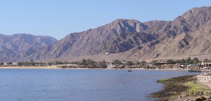نوبيع ـ جنوب سيناء: «لا تين لا زيتون»