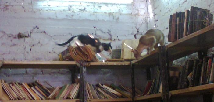 🔴 بالصور.. قطط تلعب بكتب قصر ثقافة العسيرات بسوهاج.. وحيوانات في حديقته 📷