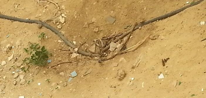 بالصورة.. موزع كهرباء مكشوف بالعاشر من رمضان يهدد حياة المواطنين 📷