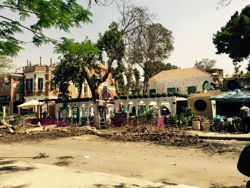 مطعم كاراكاس ينفذ مذبحة أشجار في المعادي (تصوير آية عبدالله)