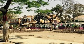 مذبحة للأشجار في شارع 9 بالمعادي
