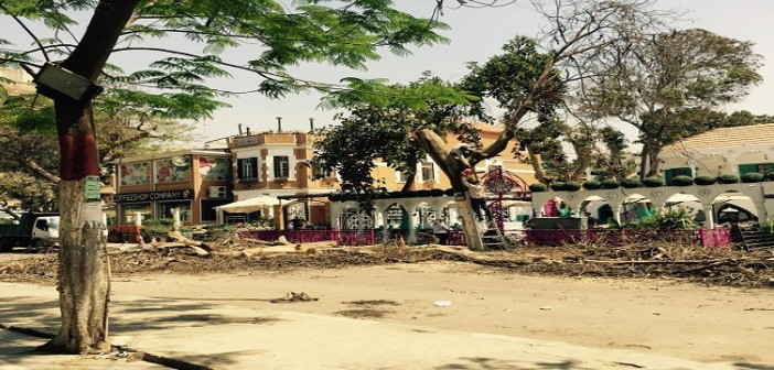 بالصور.. مطعم شهير ينفذ مذبحة أشجار في شارع 9 بالمعادي
