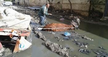 مشكلة الصرف الصحي في كفر الدوار