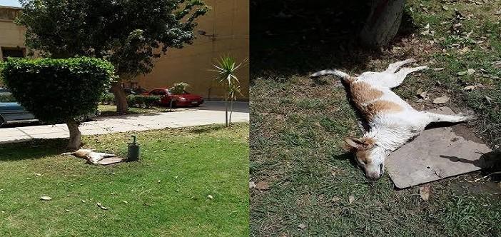 🎥 📷 بالفيديو والصور.. قتل كلب صغير بالسم في جامعة الإسكندرية