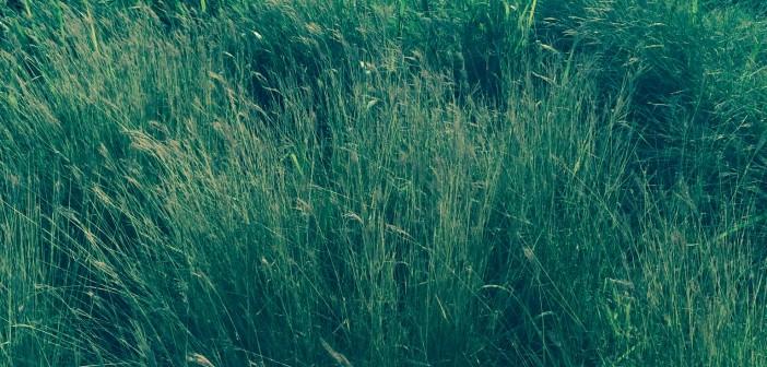 صور المزرعة 7
