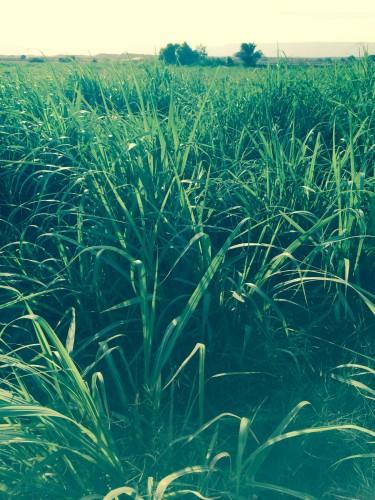 صور المزرعة 8
