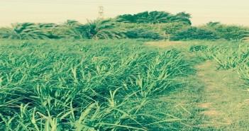 صور المزرعه 1