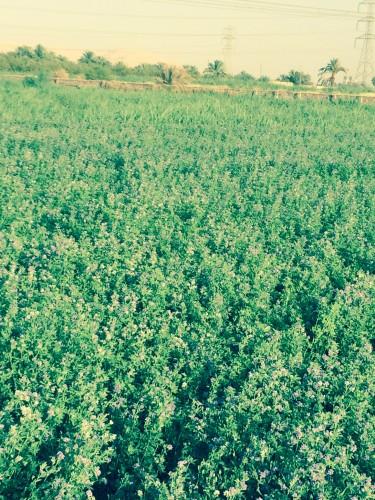 صور المزرعه2