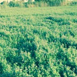 صور المزرعه3