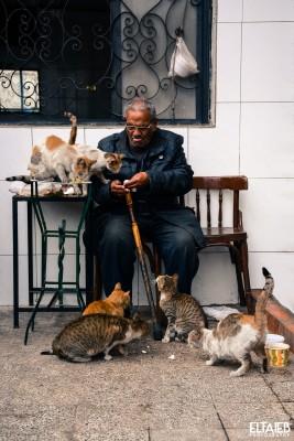 قطط تلتف حول رجل كبير ويطعمها