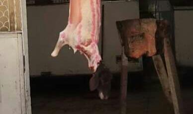 📷 تراجع شراء اللحم بعد «مذبحة الحمير».. والجزارون يطمئنون المواطنين بـ«رؤوس الذبائح»