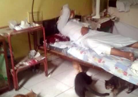 📷 4 قطط تحت سرير مريض بمستشفى السنطة في الغربية