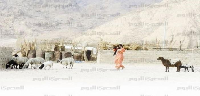 نوبيع.. مواطنون مهددون بالتشرد لعدم تفعيل قانون تقنين أراضي سيناء: «الدولة زعلانة م الغلابة»