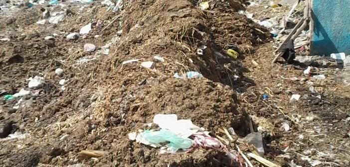 مواطنون يعانون من مخلفات وروث الماشية بقرية «الطاهرة» بالزقازيق