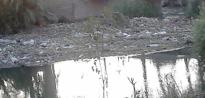 «النواورة» ببداري أسيوط تعاني الإهمال (صور وفيديو)