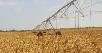 تلف محاصيل عشرات الآلاف من الأفدنة شرق قناة السويس