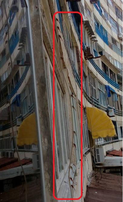 ذعر في الإسكندرية لانتشار أسراب من حشرة الرعاش