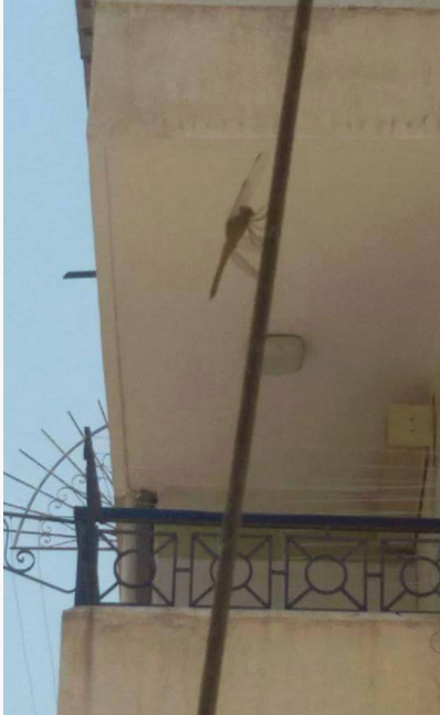 فزع في الإسكندرية لانتشار أسراب من حشرة الرعاش