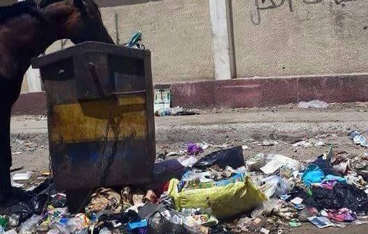بالصور.. قمامة في بورسعيد من الكورنيش للأحياء الشعبية.. والبقر يتجول بالشوارع 📷