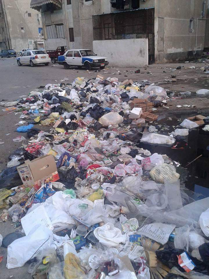 بالصور.. قطط في مستشفى ببورسعيد.. وانتشار القمامة وتجول البقر في الشوارع
