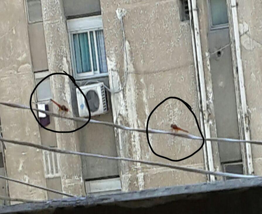بالصور.. أسراب من الدبابير تغزو الإسكندرية