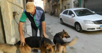 هواية تربية الكلاب في الإسكندرية
