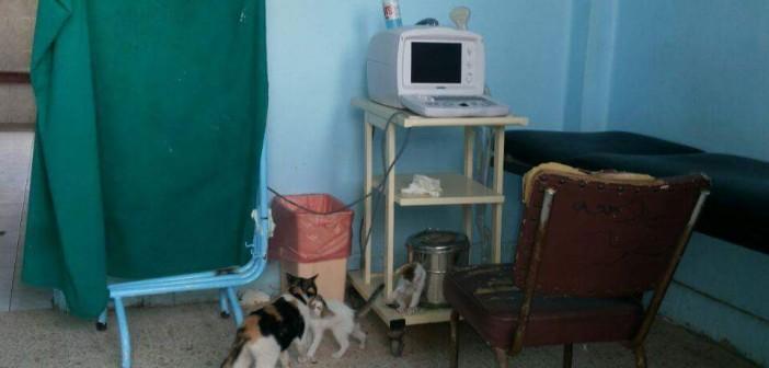 📷| قطط في غرف مستشفى بسيون بالغربية