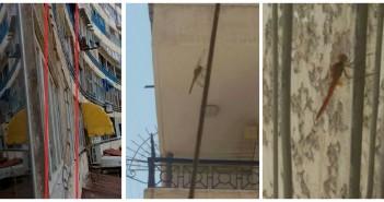 فزع في الإسكندرية لانتشار أسراب من حشرات تشبه الجراد