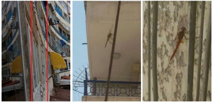 بالصور.. فزع في الإسكندرية بعد اجتياح أسراب من حشرة «الرعاش» المدينة 📷