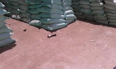 دقيق صناعة الخبز في مغاغة مُخزن في أماكن تملأها الحشرات ويأكله السوس