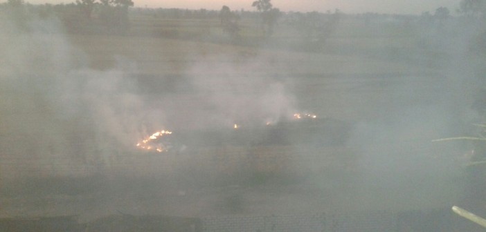 بالصور.. دخان حرق قش الأرز يغطي سماء «ديمشلت» بالدقهلية 📷