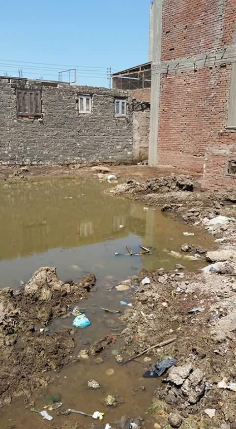 غرق بيوت وشوارع عزبة بالدقهلية.. ومواطن: لا يوجد صرف صحي