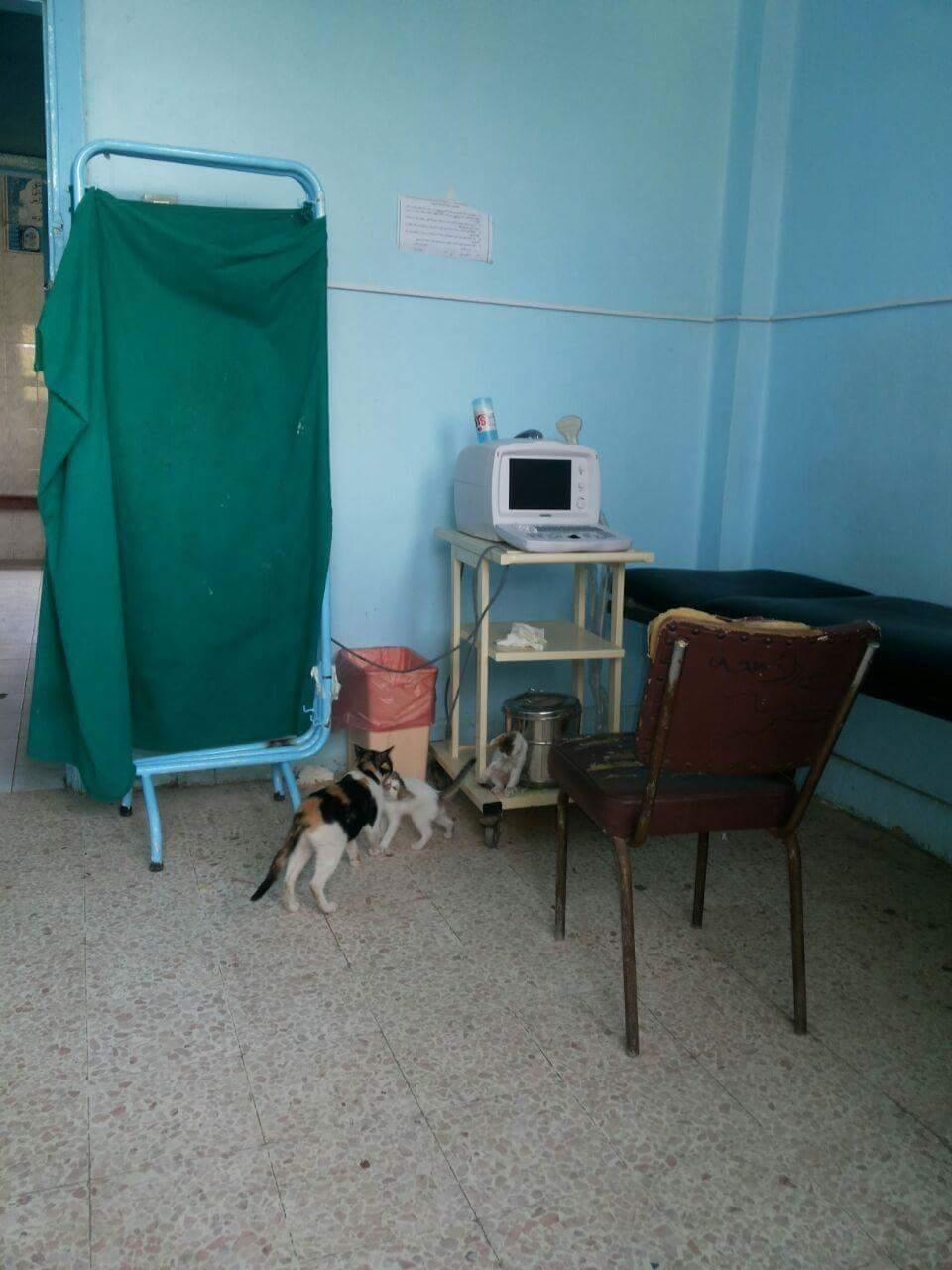 صور.. قطط تتجول في مستشفى بسيون بالغربية.. وجلوسها على أجهزة علاج المرضى