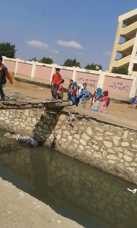 بالصور.. طلاب يواجهون خطر الموت بعبورهم مجرى مائي على جذع نخلة بالشرقية