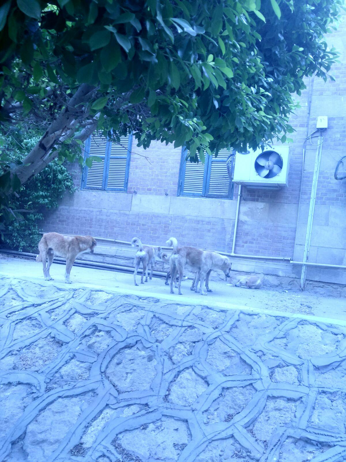 كلاب في «آداب» جامعة أسيوط تنشر الفزع بين الطلاب