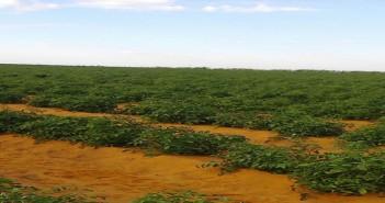 صاحب مزرعة بالبحيرة: غلاء أسعار الطماطم والخضروات مُستمر حتى أوائل ديسمبر